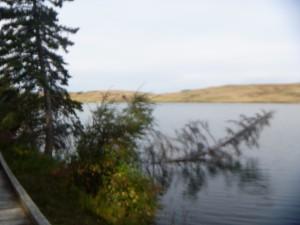 Fallen trees along shoreline of Elkwater Lake.